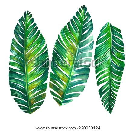 Листья для пальмы