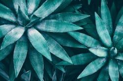 tropical leaves, blue toned