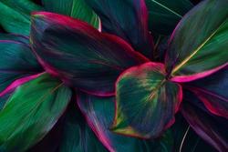 tropical leaves, colorful dark foliage, botanical nature background