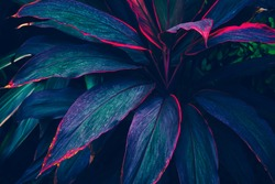 tropical leaves, dark green and purple foliage, botanical nature background