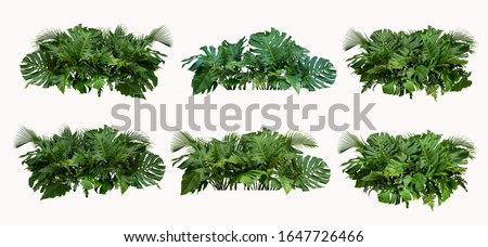 Tropical leaves foliage plant bush floral arrangement nature backdrop isolated on white background,  Foto stock ©