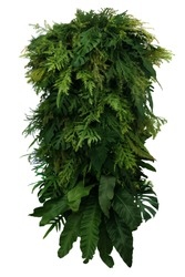 Tropical leaves foliage plant bush floral arrangement, vertical green wall nature backdrop isolated on white background with clipping path.