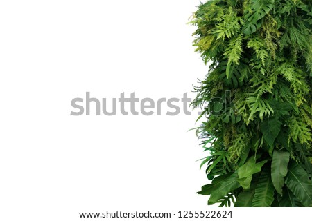 Tropical leaves foliage plant bush, vertical green wall nature backdrop border on white background with clipping path. #1255522624