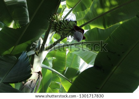 Tropical leaves Green