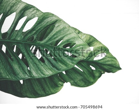 Tropical leaves isolated #705498694