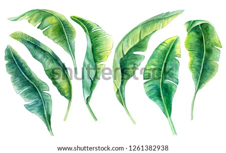 Tropical leaves. Jungle botanical watercolor illustrations, floral elements, a set of banana palms, green leaves. Watercolor. Illustration. Template. Clip art.