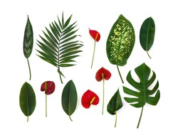 Tropical leaves (Monstera, Dieffenbachia, branch palm, Ficus benjamina) and red flowers and leaf Anthurium (tailflower, flamingo flower, laceleaf) on a white background. Top view, flat lay