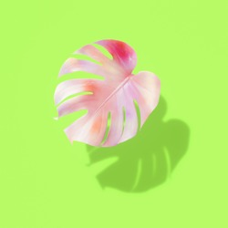 Tropical leaves, monstera in green and yellow colors pastel. Mint background with white zigzags. Fashionable and glamorous decoration of any of your bold advertising projects.