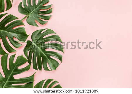 Tropical leaves Monstera on pink background. Flat lay, top view #1011921889