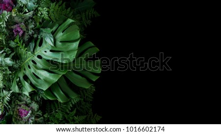 Tropical leaves Monstera philodendron and ornamental plants flora arrangement nature backdrop on black background.