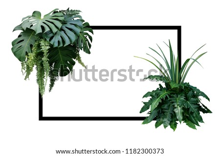 Tropical leaves nature border, foliage plant bush (Monstera, fern, philodendron and dracaena)  floral arrangment on white background with black frame. #1182300373