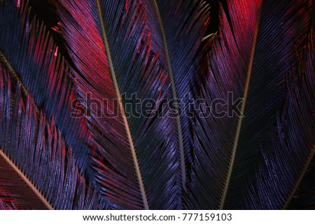 Tropical leaves of palm tree in magenta colors. Nature creative pattern. Abstract botanical background. Creative image of exotic flora. Organic wallpaper.