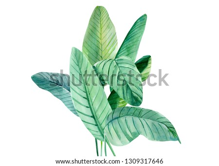 tropical leaves on a white background, palm leaves, watercolor illustration #1309317646