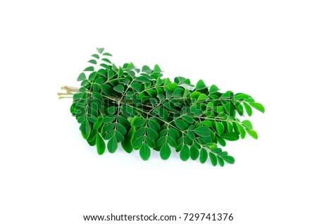 Tropical leaves on white background #729741376