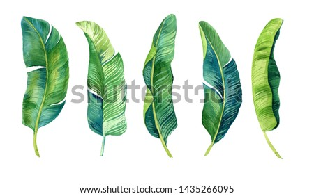 Tropical leaves, palm leaves drawn by hand. Set of watercolor illustrations. For fabric, cards, invitations, weddings and other
