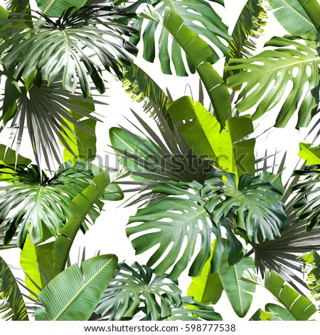 Tropical leaves pattern. Green leaf exotic plants seamless. Artistic photo collage for floral print. Natural leaves palm, banana, monstera template background. #598777538