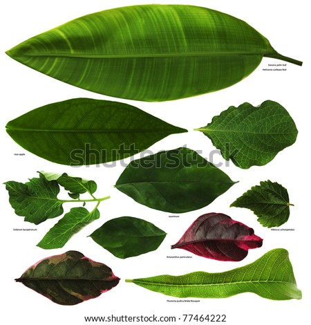 Tropical leaves photo set. - Shutterstock ID 77464222