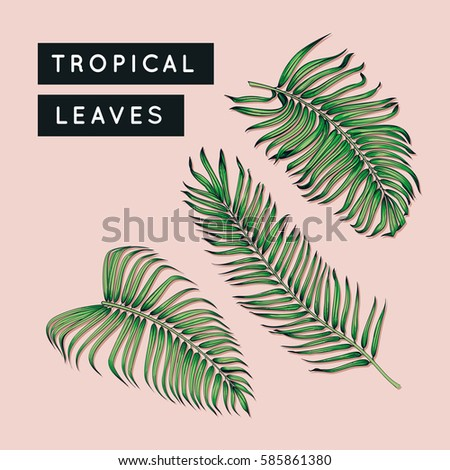 Tropical leaves set. Jungle tree branch. Vintage floral illustration. Hawaiian art. Exotic plants leaf. Botanical drawing. Raster image. #585861380