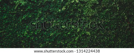 Tropical leaves texture,Abstract nature leaf green wall texture background.vintage dark tone,picture can used wallpaper desktop. #1314224438