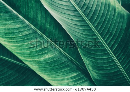 tropical leaves texture background #619094438
