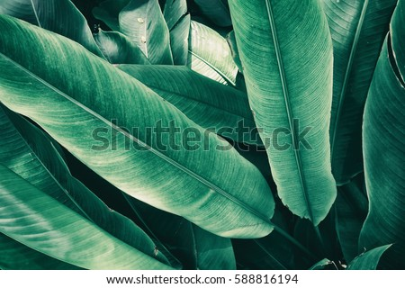 tropical leaves, vintage tone #588816194