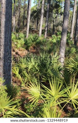 tropical lush palm  #1329448919