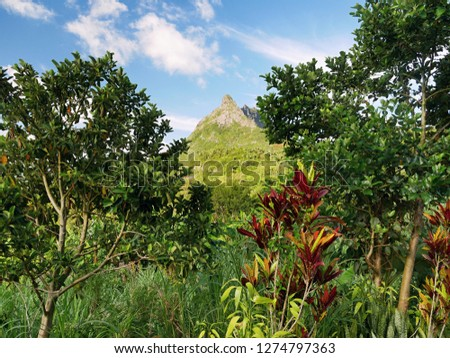Tropical lush vegetation. Mauritius island #1274797363
