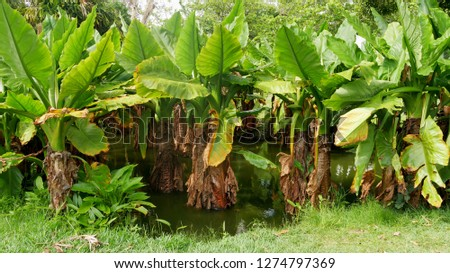 Tropical lush vegetation. Mauritius island #1274797369
