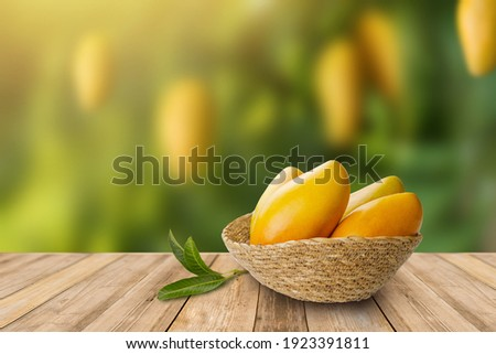 Tropical mango fruit in basket with leaf on wooden table with mango garden on background