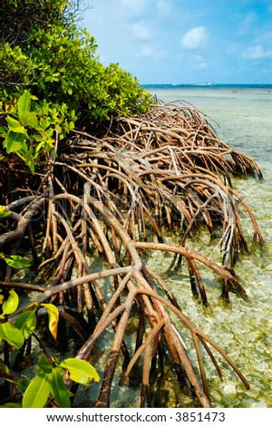 Tropical Mangroves