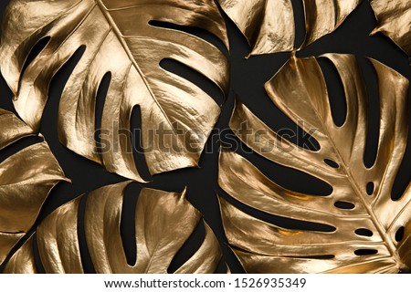 Photo of  Tropical monstera leaves creatively arranged on black background. Trendy luxury fashion pattern design. Natural botany floral composition.