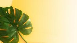Tropical monstera palm leaf on beige gradient background for  summer design.Large image for banner.