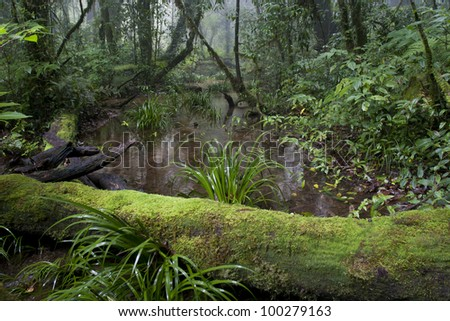 Tropical mountain forest