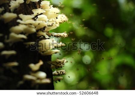 tropical mushroom,chiang mai,thailand