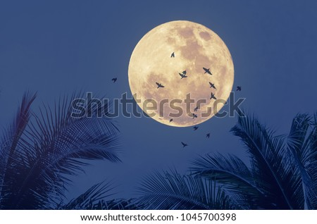 Stock Photo Tropical night. Full moon and palm leaf birds fly abstract background. Copy space of nature environment and travel adventure concept. Vintage tone filter effect color style.