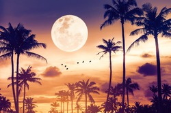 Tropical night. Full moon and palm tree birds fly abstract background. Copy space of nature environment and travel adventure concept. Vintage tone filter effect color style.