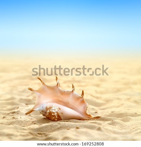 Tropical ocean paradise design postcard. A beach with seashell of lambis truncata on the sand