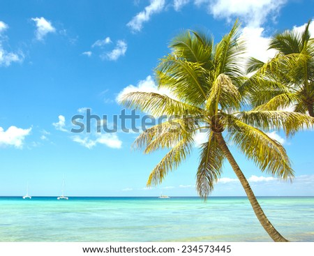 tropical palm and sea #234573445
