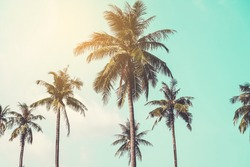 Tropical palm coconut trees on sunset sky flare and bokeh nature background.