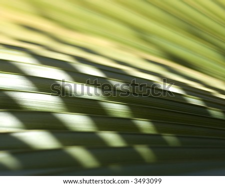 Tropical Palm Detail