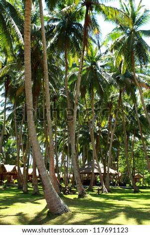 Tropical palm garden in beautiful paradise