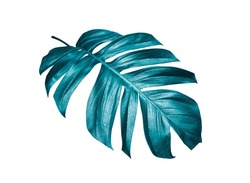 tropical palm leaf isolated on white background with clipping path for summer design elements