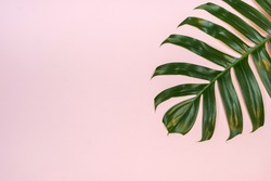 Tropical palm leaf on pink background. Flat lay, top view