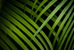 Tropical palm leaves background.