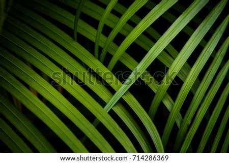 Tropical palm leaves background. #714286369