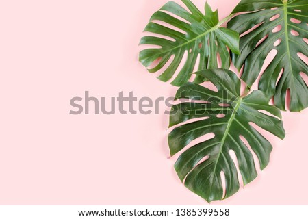 Tropical palm leaves Monstera on pink background. Flat lay, top view minimal concept.