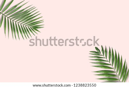 Tropical palm leaves on a pink background for designs. Summer Styled. High quality image. Top view #1238823550