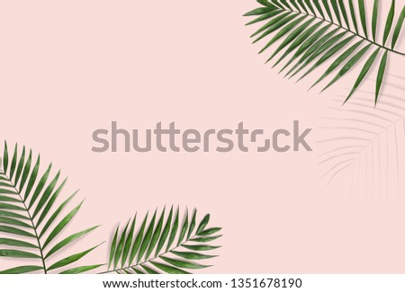 Tropical palm leaves on a pink background for designs. Summer Styled. High quality image. Top view #1351678190