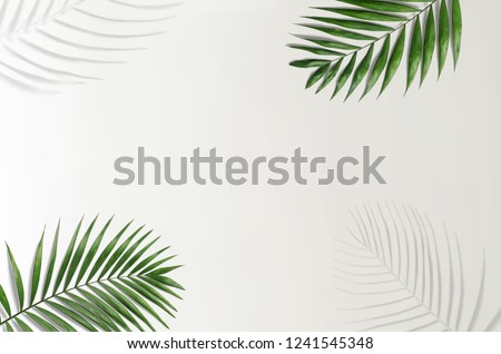 Tropical palm leaves on a white and grey background for designs. Summer Styled. High quality image. Top view #1241545348