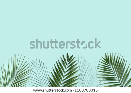 Tropical palm leaves on blue background for design. Summer Styled. High quality image. Top view